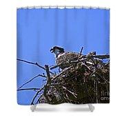Angry Bird Shower Curtain