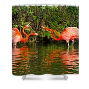 Angry Birds - Doubles Match Shower Curtain