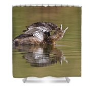 Angry Grebe Shower Curtain