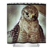Angry Hawk Shower Curtain
