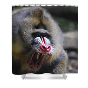 Angry Mandrill Monkey Shower Curtain