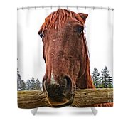 Angry Stallion Shower Curtain