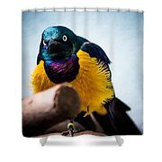 Angry Sunbird Shower Curtain