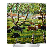 Angus Cows Under The Cool Shade By Prankearts Shower Curtain