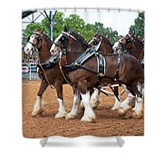 Anheuser Busch Budweiser Clydesdale Horses In Harness Usa Rodeo Shower Curtain