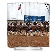 Anheuser Busch Clydesdales Pulling A Beer Wagon Usa Rodeo Shower Curtain