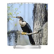 Anhinga And Spanish Moss Shower Curtain