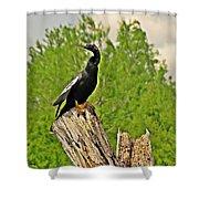 Anhinga Bird On Stump Shower Curtain