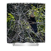 Anhinga In Brush Shower Curtain