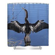 Anhinga  Sunbathing Shower Curtain