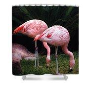Animal - Flamingo - A Set Of Flamingoes Shower Curtain