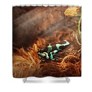 Animal - Frog - Lick The Green Frog Shower Curtain