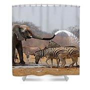 Animal Humour Shower Curtain by Johan Swanepoel