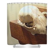 Animal Skull Mantel 1 12 2011 Shower Curtain