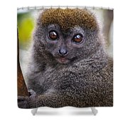 Animals 22 Shower Curtain