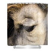 Animals Can Be Beautiful Shower Curtain