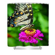 Anise  Swallowtail Butterfly Shower Curtain