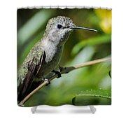 Anna Hummingbird Shower Curtain