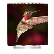 Anna's Hummingbird And The Roses Shower Curtain