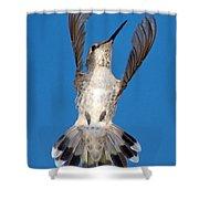 Anna's Hummingbird Tail Display Shower Curtain