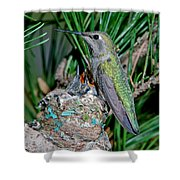 Annas Hummingbird With Young Shower Curtain