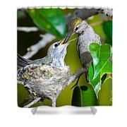 Annas Hummingbirds At Nest Shower Curtain