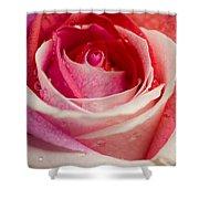 Anniversary Rose Shower Curtain