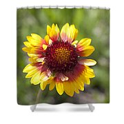 Annual Coreopsis Shower Curtain