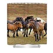 Annual Horse Round Up-laufskalarett Shower Curtain