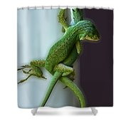Anole Lovers Shower Curtain