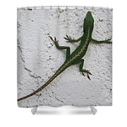 Anole On Stucco Shower Curtain
