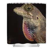 Anolis Lizard Portrait Peru Shower Curtain
