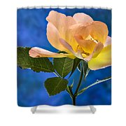 Another Beautiful Rose Shower Curtain