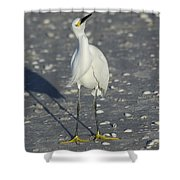 Another Flying Fish Shower Curtain