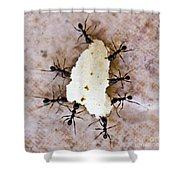 Ant Joint Venture Shower Curtain