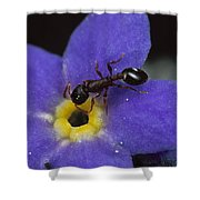 Ant With Pollen Enters Alpine Shower Curtain