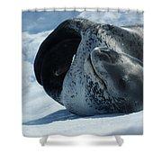 Antarctic Leopard Seal On Iceberg Shower Curtain