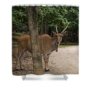 Antelope Behind A Tree Shower Curtain