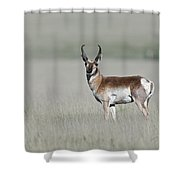 Antelope Buck Shower Curtain