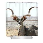 Antelope Shower Curtain