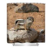 Antelope Ground Squirrel Shower Curtain