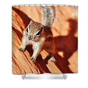 Antelope Ground Squirrel Shower Curtain