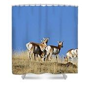 Antelope Herd   #0296 Shower Curtain