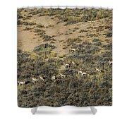 Antelope Herd Panorama  Signed   20x80 Shower Curtain
