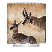 Antelope Love Shower Curtain