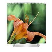 Anthers Aglow Shower Curtain