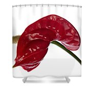 Anthurium - Backward Glance Shower Curtain