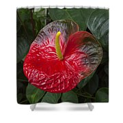 Anthurium Flamingo Flower Beauty Queen Fine Art Photography Print Shower Curtain