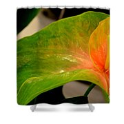 Anthurium In Red And Green Shower Curtain