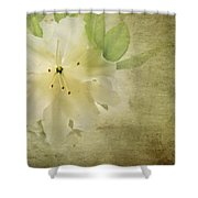 Antique Azalea Shower Curtain